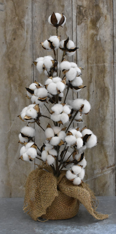 Cotton Tree - 22""