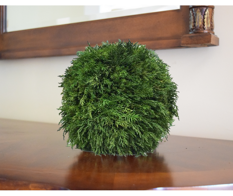 Preserved Tuscan Cypress Ball - 10""