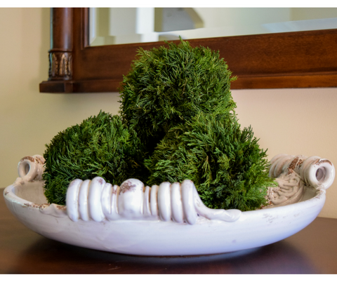 Preserved Tuscan Cypress Ball - 6""