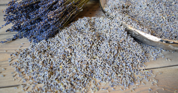 French Lavender Buds - Natural - 1 Pound Bag