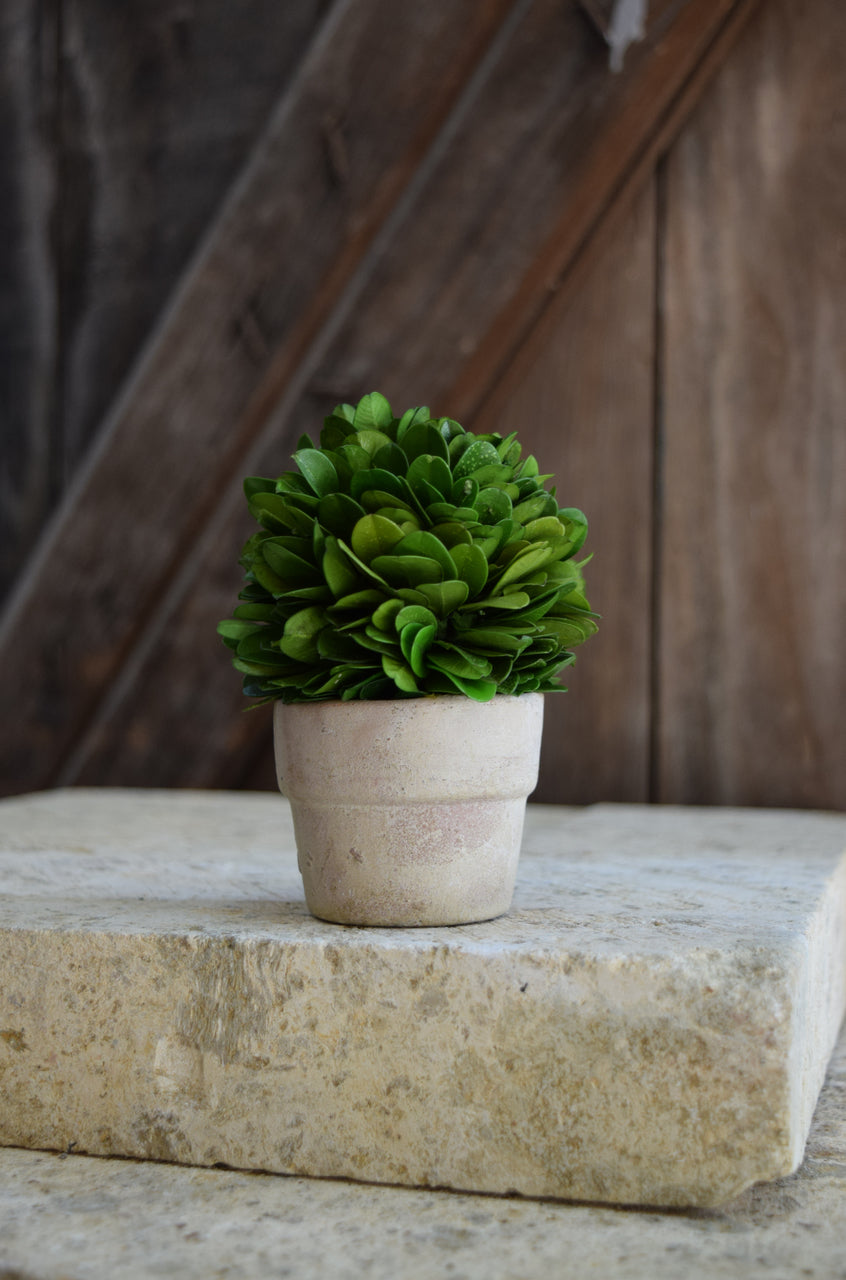 "Mini Boxwood Ball on Pot - 4"" - Set of 2"