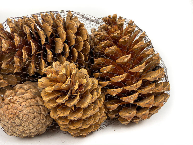 PINE-CONE-MARITIMA-BLEACH-MIXED-CLOSE