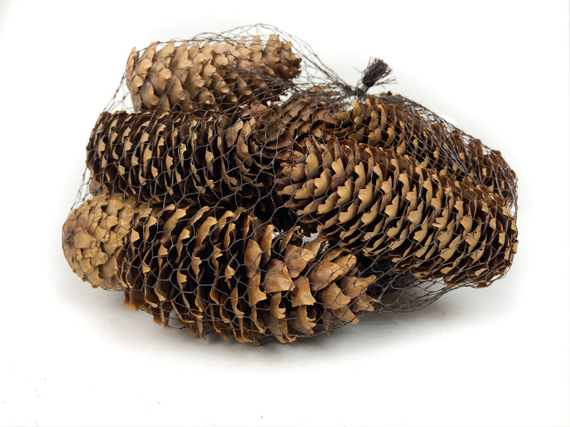 PINE-CONE-SPRUCE-NATURAL-12-PIECES