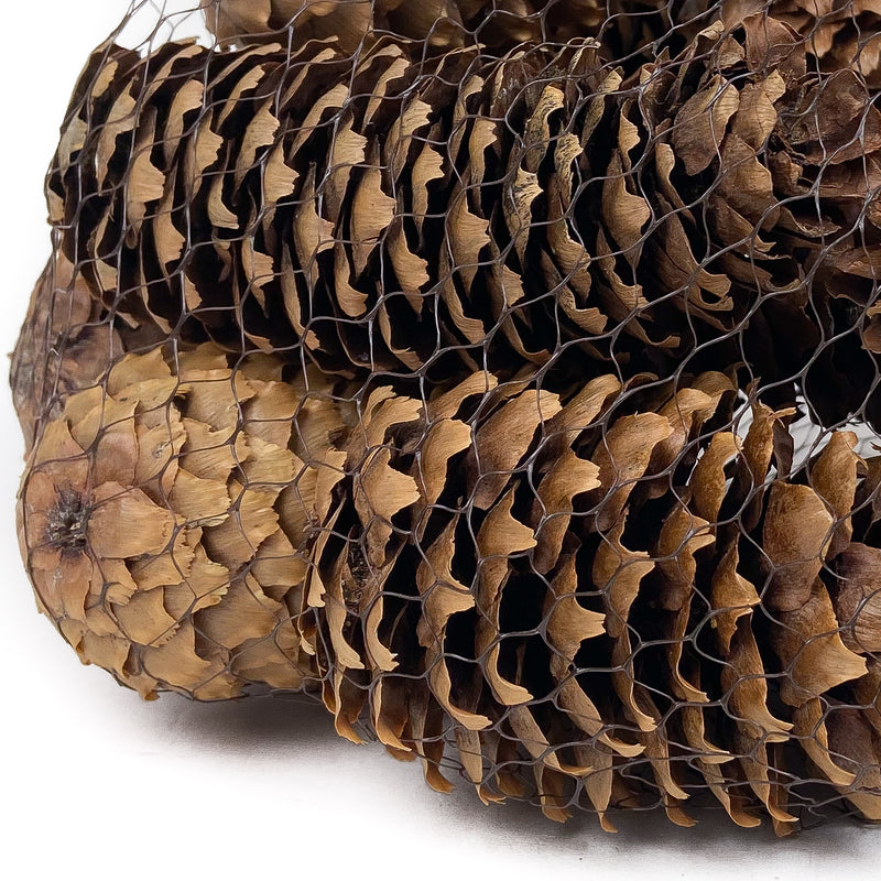 PINE-CONE-SPRUCE-NATURAL-12-PIECES-CLOSE