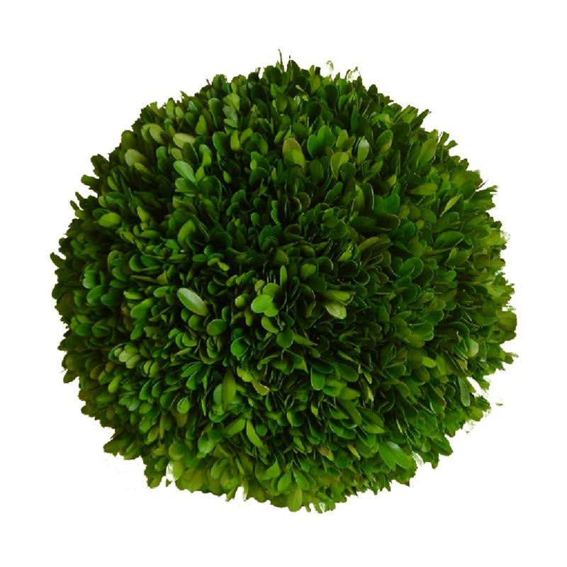 "Preserved Boxwood Ball - 10"" - HOME DECORATIVE ACCENTS"