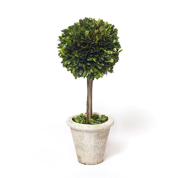 "Preserved Boxwood Single Ball Topiary - 16"" - HOME DECORATIVE ACCENTS - 2"