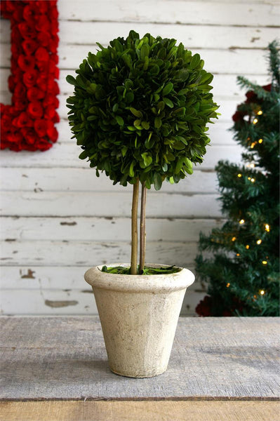 "Preserved Boxwood Single Ball Topiary - 16"" - HOME DECORATIVE ACCENTS - 1"