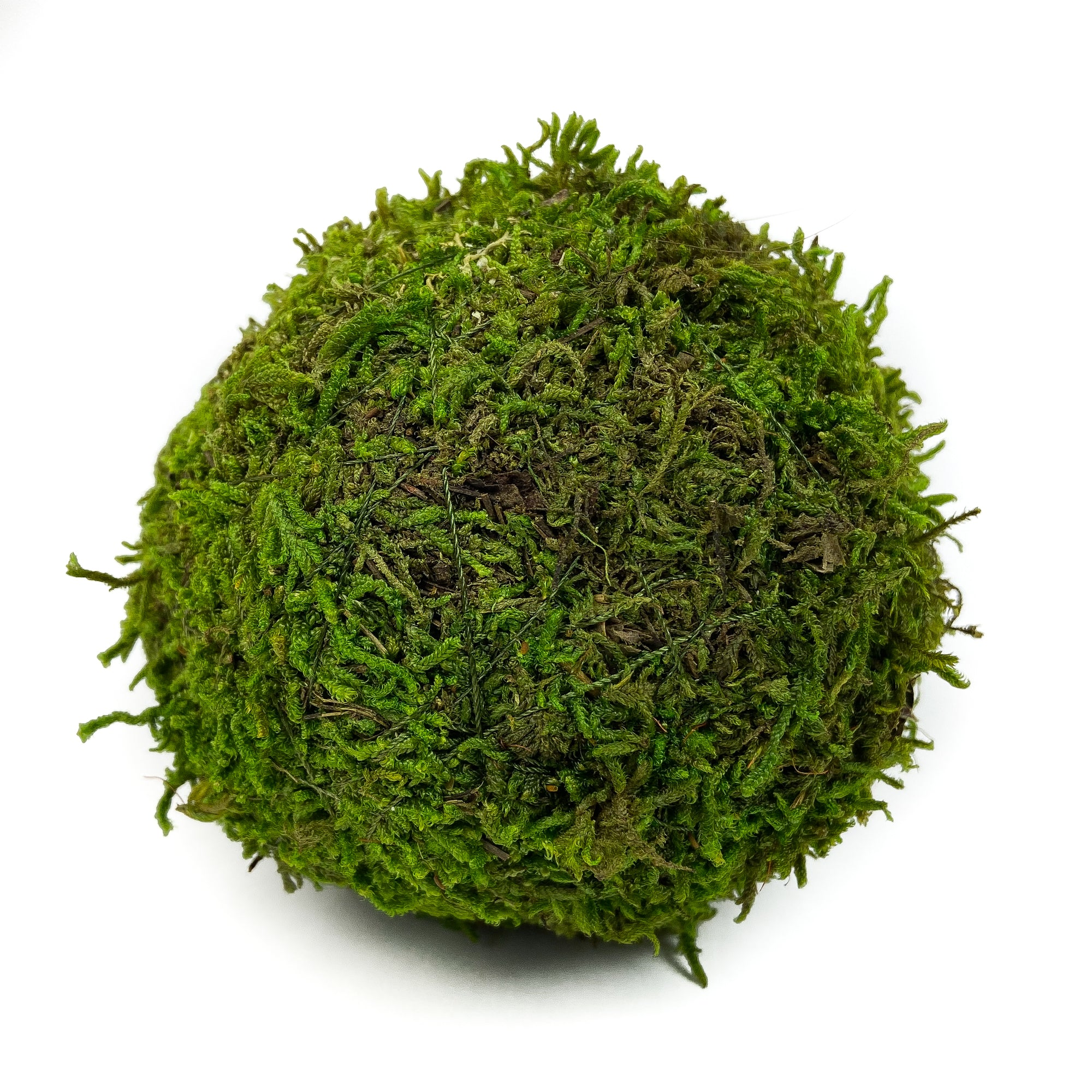SHEET-MOSS-BALL-PRESERVED-GREEN-4-INCH