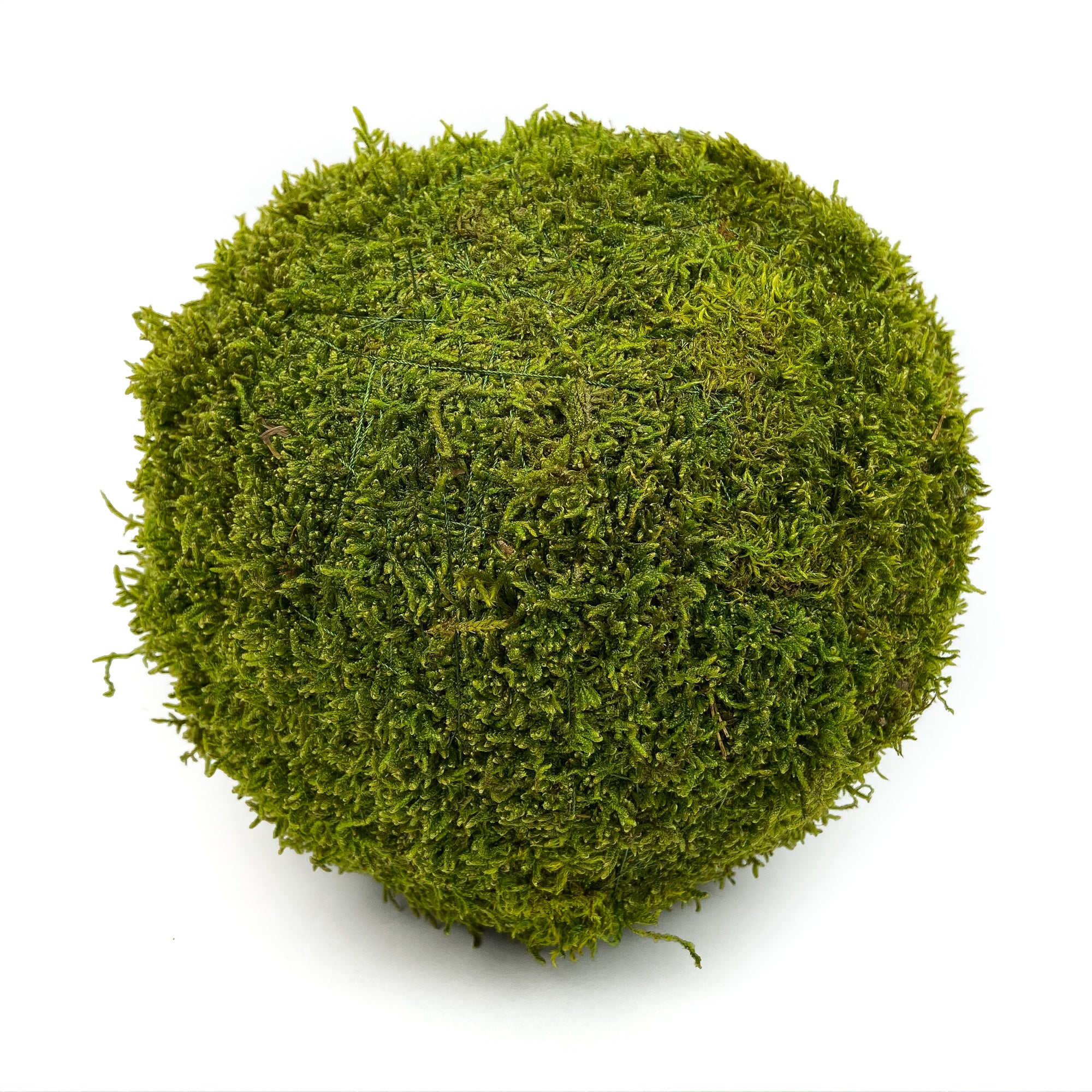 SHEET-MOSS-BALL-PRESERVED-GREEN-8-INCH