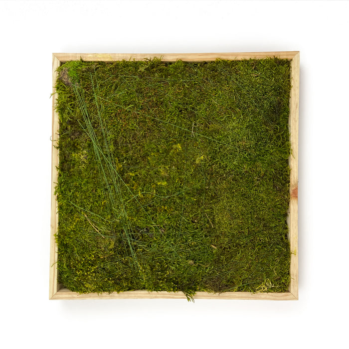 SHEET-MOSS-SQUARE-PRESERVED-GREEN-16-INCHES