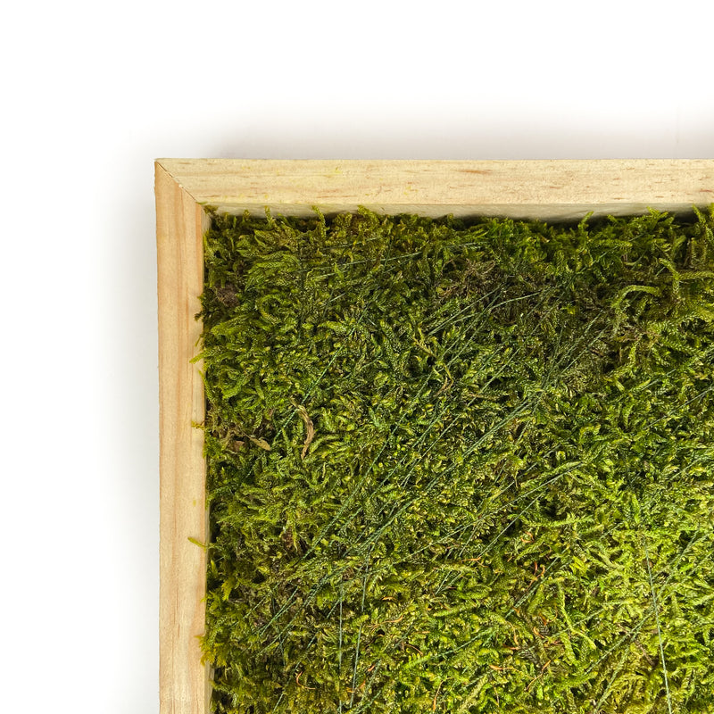 SHEET-MOSS-SQUARE-PRESERVED-GREEN-16-INCHES-CLOSE
