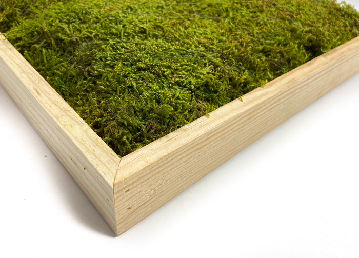 SHEET-MOSS-SQUARE-PRESERVED-GREEN-16-INCHES-CLOSE-UP