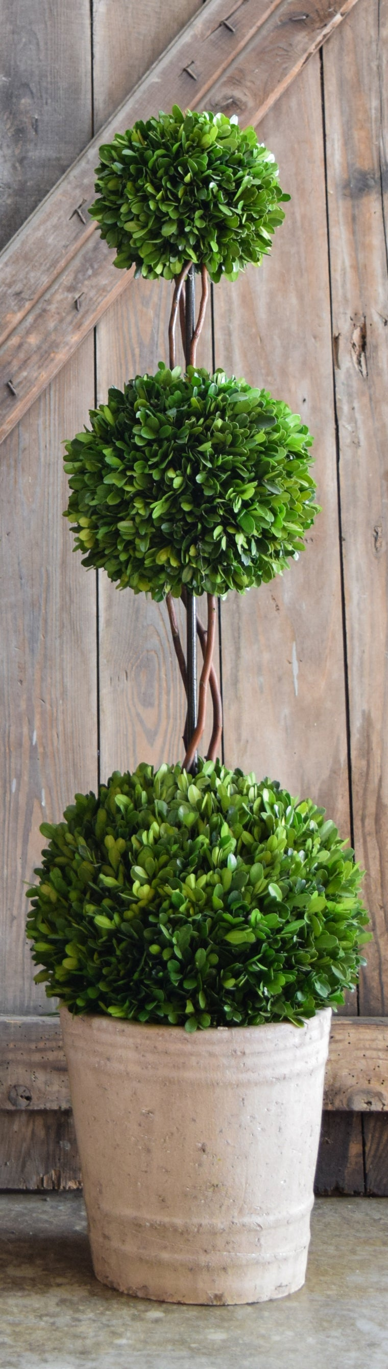 Preserved Boxwood Triple Ball Topiary - 40