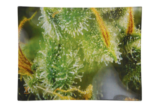Tricomb Jungle Glass Rolling Tray  - 2 Sizes