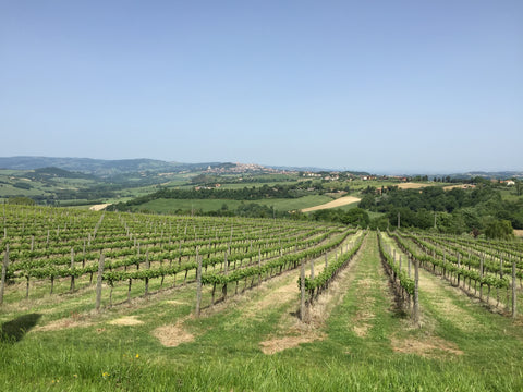 Vineyards in umbrian countryside. italy travel