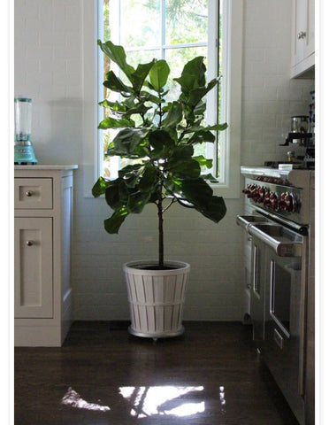 adding life to kitchen with indoor plant.