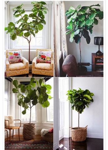 brilliant green home. use of indoor plants. garden