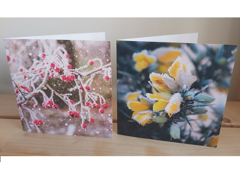 Christmas card offer: Two packs of Christmas cards for £8