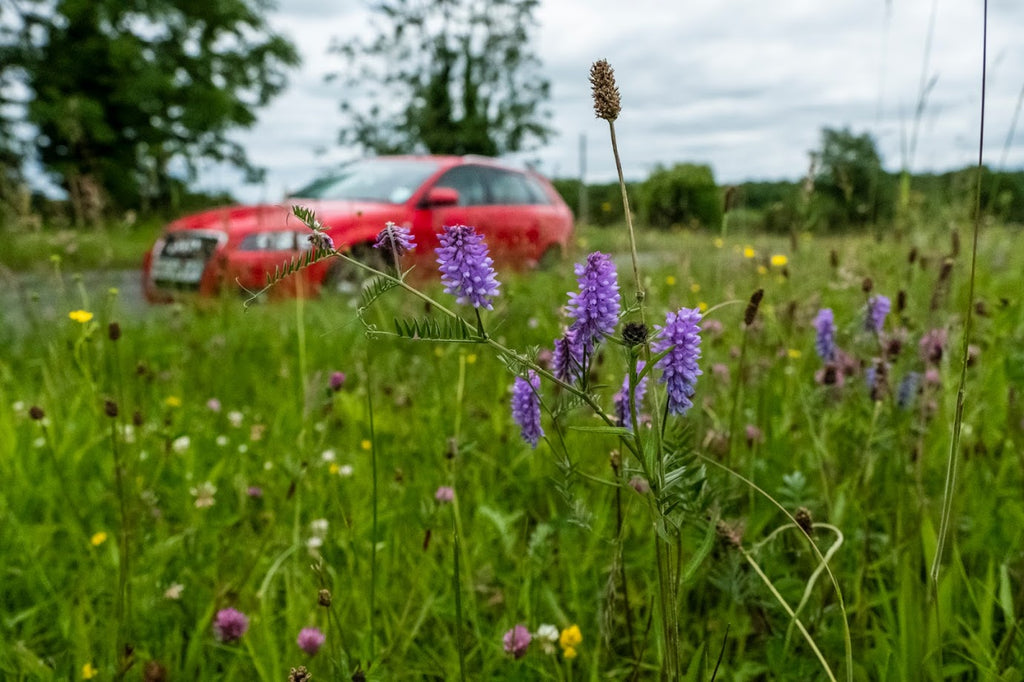 Restore our Road Verges