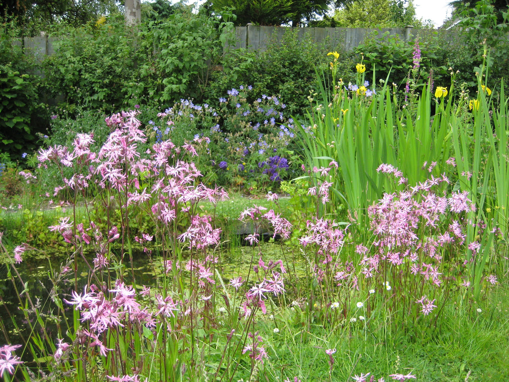 'Around the Pond' Wild flower seed mixture