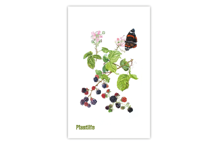 Blackberry print tea towel