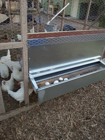 Rear collection chicken nest box