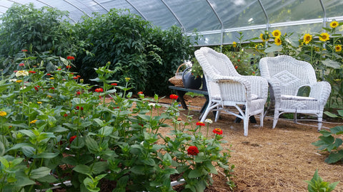Greenhouse fertilized by chickens