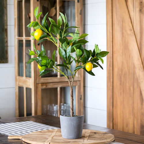 Lemon Tree in Cement Pot