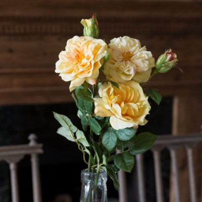 Yellow Rose Bundle