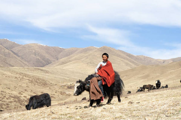 Yaks and Transport