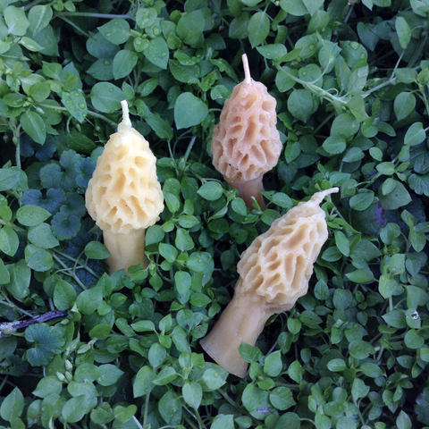 Beeswax Morel Mushroom Candles - Candles - Asheville Fungi