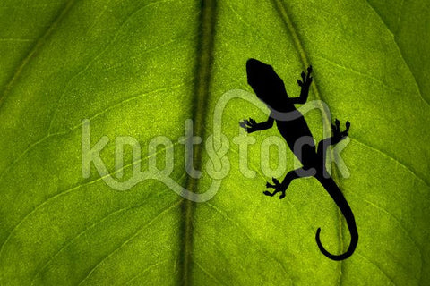 Gecko on a Leaf