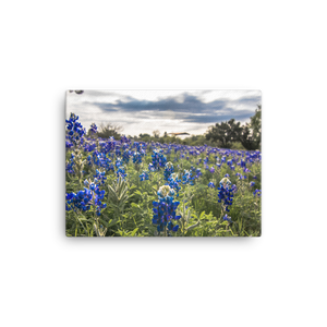 Bluebonnets by the Lake Canvas