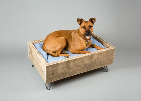 Dog in raised dog bed