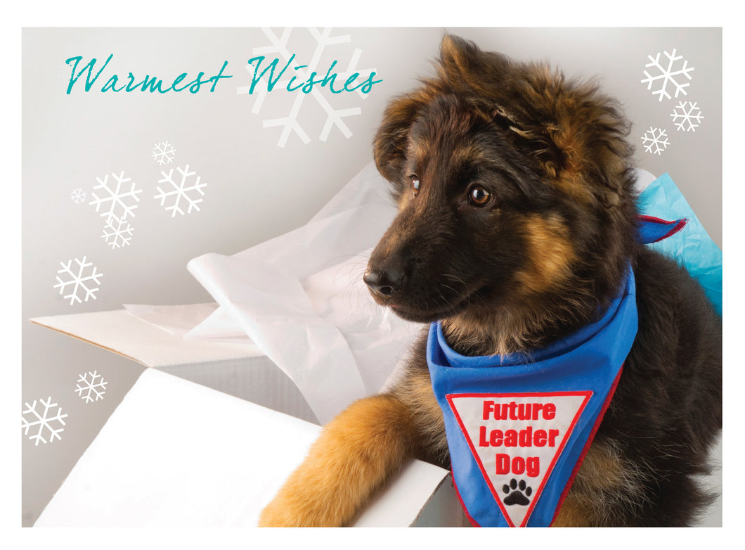 Holiday Cards 2015 Shepherd