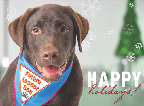 Holiday Cards 2017 Chocolate Lab
