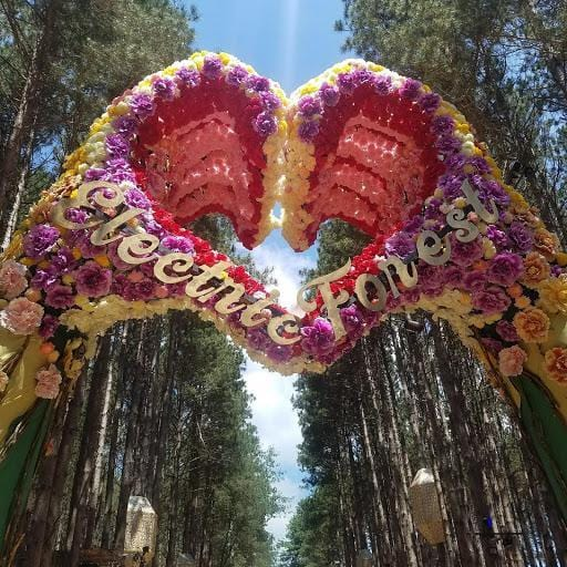 The Magic of Electric Forest: My Memorable Experience