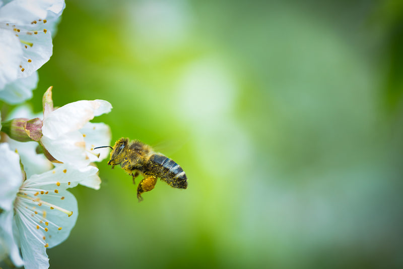 When does Honey Bee Season Start?