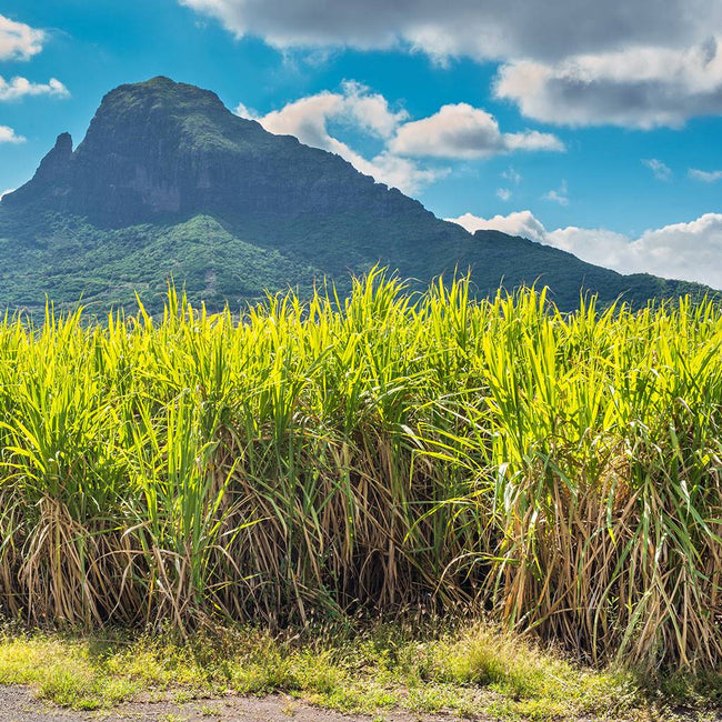 Why is Hawaiian sugar cane the best for Hanalei products