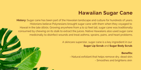 Hanalei presents the history of Hawaiian Sugar Cane