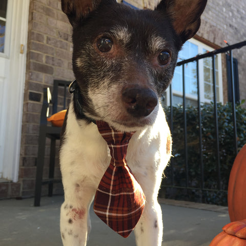 Pet Bow Ties & Ties