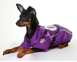 NFL - Baltimore Ravens Dog Jersey - Three Humans & A Dog Company  - 2