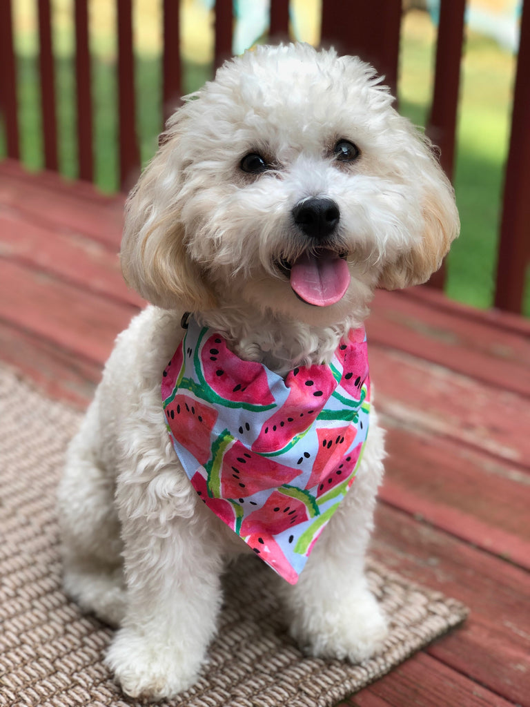 Bandana - Designed Watermelon Delight