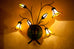Star Lily Sconce Honey Opal