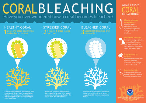 coral bleaching and why you should care