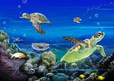 3D Lenticular Magnet: Sea Turtles