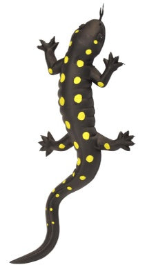 Yellow Spotted Salamander (9-inch)
