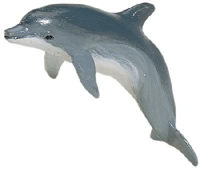 Monterey Bay Bottlenose Dolphin Adult