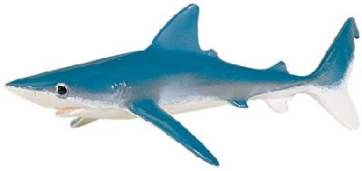 Monterey Bay Blue Shark