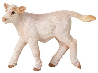 Safari Farm Charolais Calf